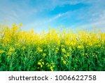 rape yellow bloom beautiful... | Shutterstock . vector #1006622758