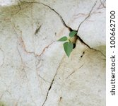 Little Plant Growth In Cracked...