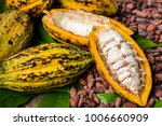 cocoa beans and cocoa pod on a... | Shutterstock . vector #1006660909