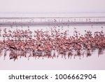 Flamingos Group At Manyara Lak...
