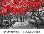 Canopy Of Red Trees In Surreal...