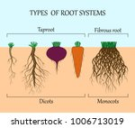 types of root systems of plants ... | Shutterstock .eps vector #1006713019
