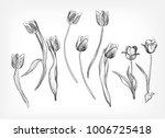 Tulips Vector Design Elements...