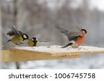 bird of bullfinch and titmole... | Shutterstock . vector #1006745758