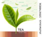 green tea. sprig of tea. flying ... | Shutterstock .eps vector #1006748836