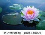 Stock photo beautiful pink waterlily or lotus flower in pond 1006750006
