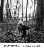 Australian Shepherd on a sunrise hike in Alum Creek State Forest - Westerville, OH (January 2018)