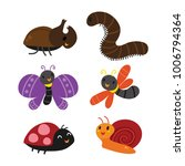 insect collection design   Shutterstock .eps vector #1006794364