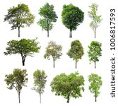 Collection Isolated Trees White Background - Fine Art prints