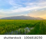 paddy field ambient sunset | Shutterstock . vector #1006818250