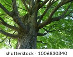 low angle view of green tree... | Shutterstock . vector #1006830340