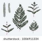 leaf illustration object.... | Shutterstock .eps vector #1006911334