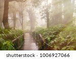 wooden walkway nature walk on a ... | Shutterstock . vector #1006927066