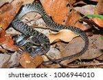 snake in forest  wild animals | Shutterstock . vector #1006944010