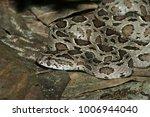 snake in forest  wild animals | Shutterstock . vector #1006944040
