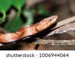 snake in forest  wild animals | Shutterstock . vector #1006944064