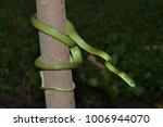 snake in forest  wild animals | Shutterstock . vector #1006944070