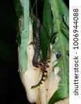 snake in forest  wild animals | Shutterstock . vector #1006944088