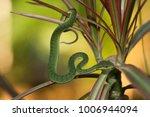 snake in forest  wild animals | Shutterstock . vector #1006944094