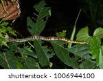 snake in forest  wild animals | Shutterstock . vector #1006944100