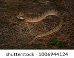 snake in forest  wild animals | Shutterstock . vector #1006944124