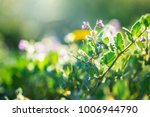 spring beautiful lilac wild... | Shutterstock . vector #1006944790
