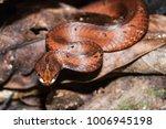 snake wild animals | Shutterstock . vector #1006945198