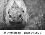 artistic  black and white photo ... | Shutterstock . vector #1006991578