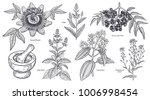 set of isolated medical plants  ... | Shutterstock .eps vector #1006998454