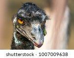 emu bird | Shutterstock . vector #1007009638