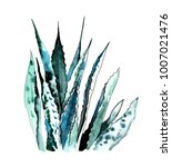 aloe watercolor illustration | Shutterstock . vector #1007021476