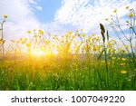 mountain landscape with the sun | Shutterstock . vector #1007049220