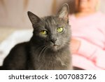 big old cat sitting on elderly... | Shutterstock . vector #1007083726