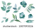 branches and leaves of... | Shutterstock . vector #1007093326