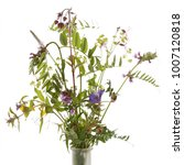 bouquet of wildflowers isolated ... | Shutterstock . vector #1007120818