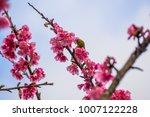 chestnut flanked white eye ... | Shutterstock . vector #1007122228