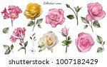 Stock photo set watercolor elements of roses collection garden pink yellow flowers leaves branches botanic 1007182429