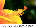 close up  beautiful flower | Shutterstock . vector #1007199880