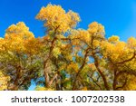 beautiful autumn landscape... | Shutterstock . vector #1007202538