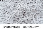fluffy snow on black branches | Shutterstock . vector #1007260294