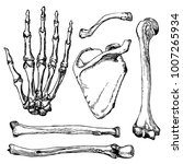 set of human hand bones with... | Shutterstock .eps vector #1007265934