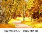 Woods Landscape Sunlit Foliage