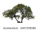 isolated big tree on white... | Shutterstock . vector #1007298580