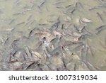 iridescent shark  striped... | Shutterstock . vector #1007319034