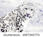 beautiful snow cat | Shutterstock . vector #1007342773