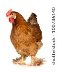 Chicken Isolated On White