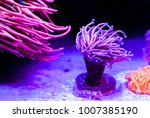 Corals Of Marine Aquarium