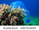 plastic bottle on coral reef | Shutterstock . vector #1007414659