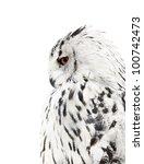 Stock photo big grey owl isolated on white background 100742473