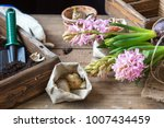 gardening and planting concept. ...   Shutterstock . vector #1007434459